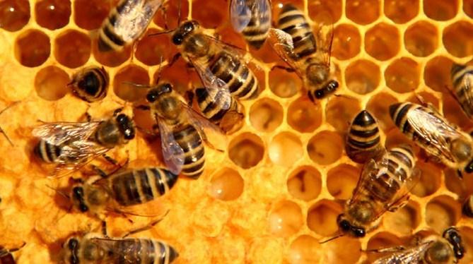 On a testé les différentes utilisations de la cire d'abeille