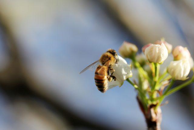 Comment utiliser le maturateur à miel?